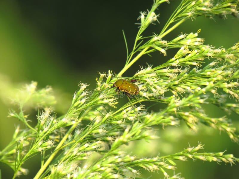 Groen Lieveheersbeestje op klein wit bloemboeket met sunshinesmorni royalty-vrije stock foto's