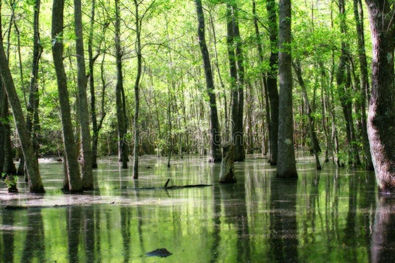 Groen moerasland stock afbeelding