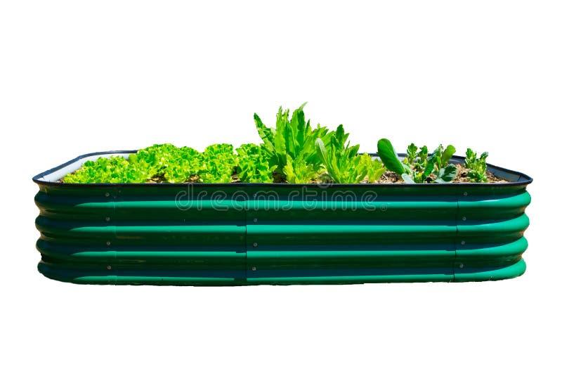 Groen moestuinbed dat op witte achtergrond wordt geïsoleerd royalty-vrije stock foto