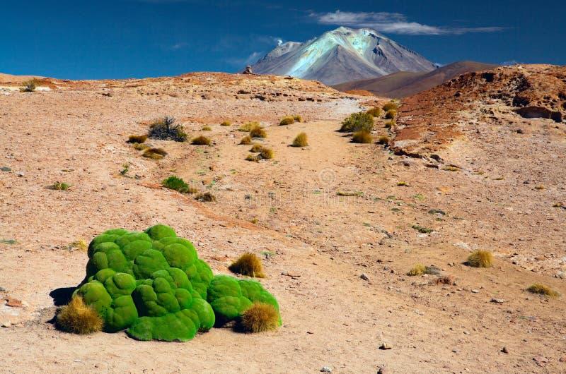 Groen mos in altiplanolandschap Bolivië van de Andes stock afbeelding