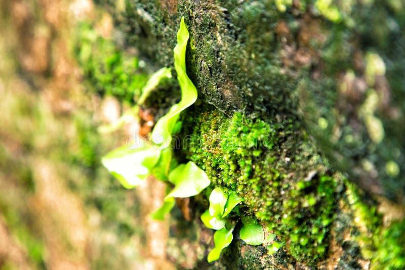 Groen mos in de herfstlicht stock afbeelding