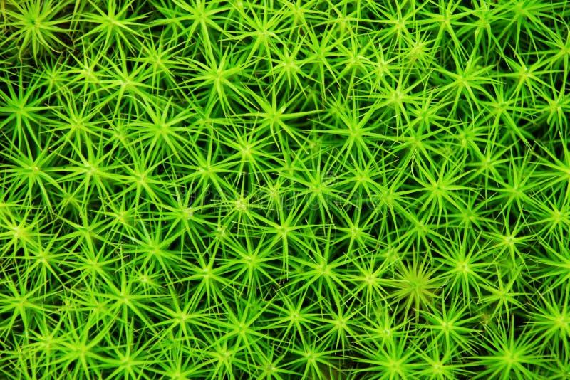 Groen mos in een bos voor achtergrond stock afbeeldingen