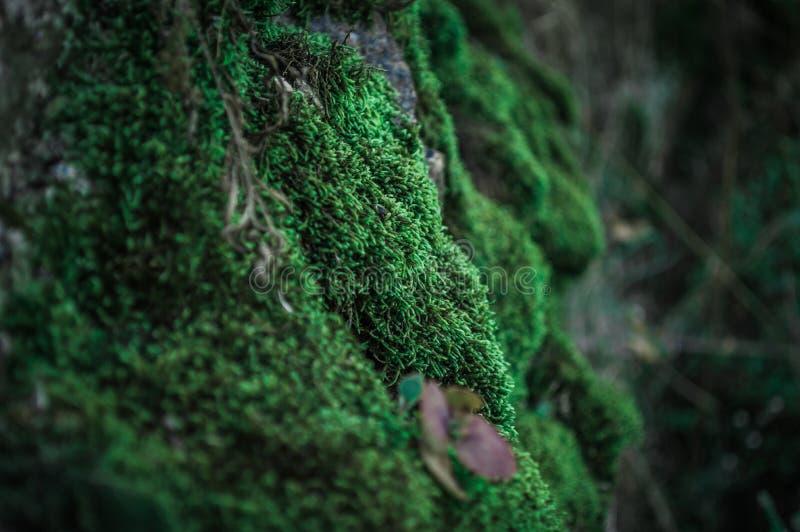 Groen Mos op de rots stock foto's