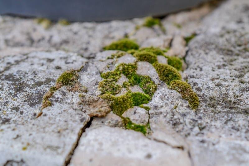 Groen Mos op de rots royalty-vrije stock afbeelding