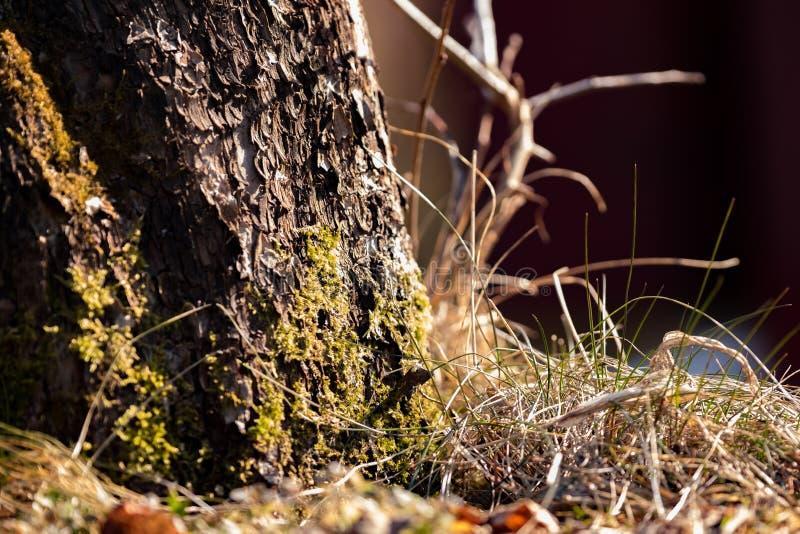 Groen mos op een boom in een de lentebos stock foto