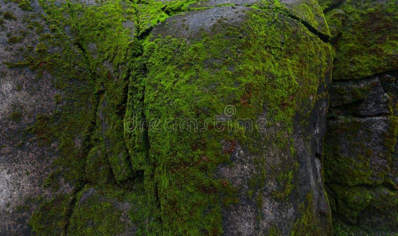 Groen mos op rots stock fotografie