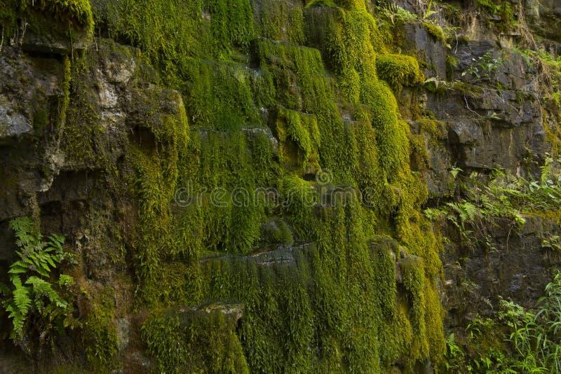 Groen mos op rotsmuur - voorraadfoto royalty-vrije stock afbeeldingen