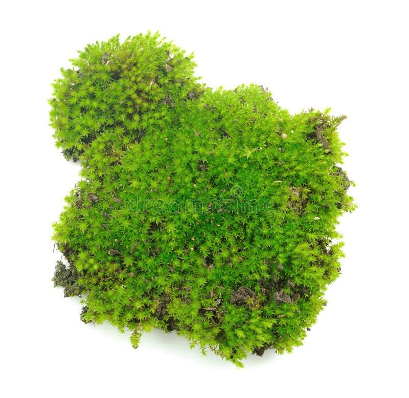 Groen mos op witte achtergrond royalty-vrije stock fotografie