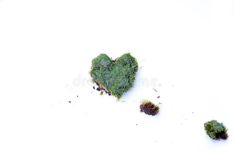 Groen mos op witte achtergrond Groen die mos op witte bakground wordt ge?soleerd stock afbeelding