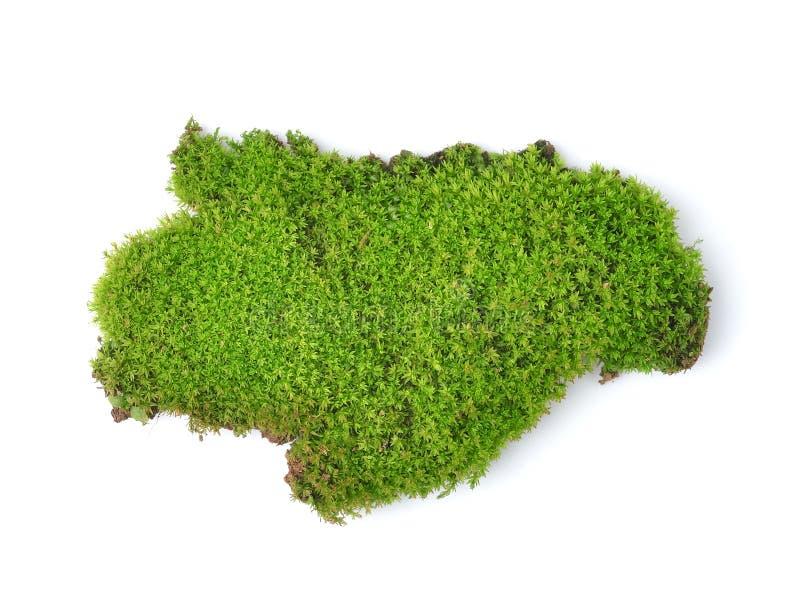 Groen mos op witte bakground stock afbeelding