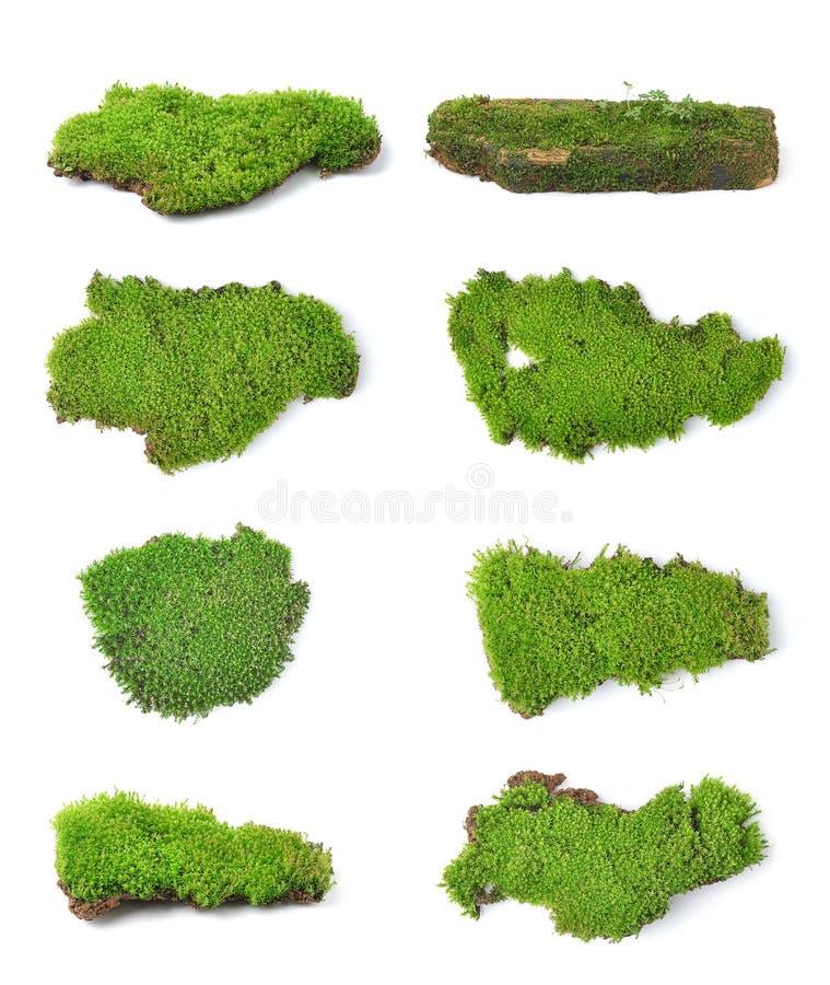 Groen mos op witte bakground royalty-vrije stock foto's