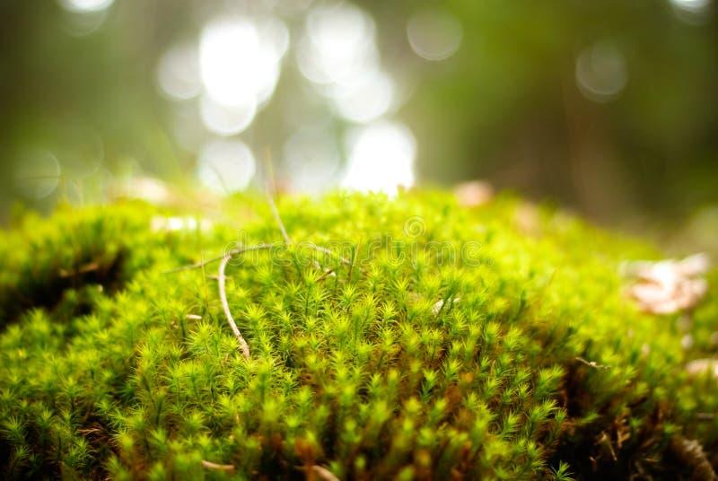 Groen mosbos stock afbeeldingen