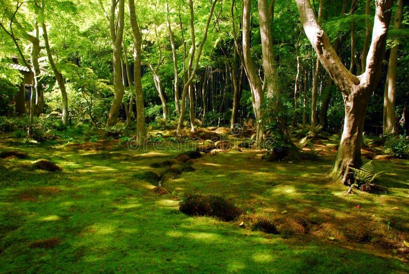 Groen mosbos stock foto's