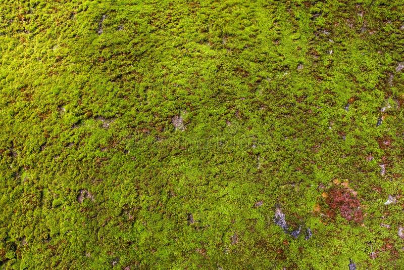 Groen Moss Seamless Tileable Texture royalty-vrije stock afbeeldingen