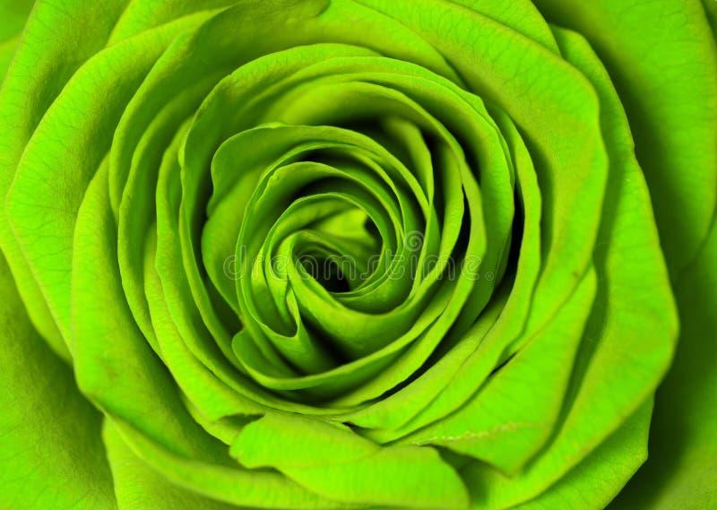 Groen nam toe royalty-vrije stock afbeeldingen