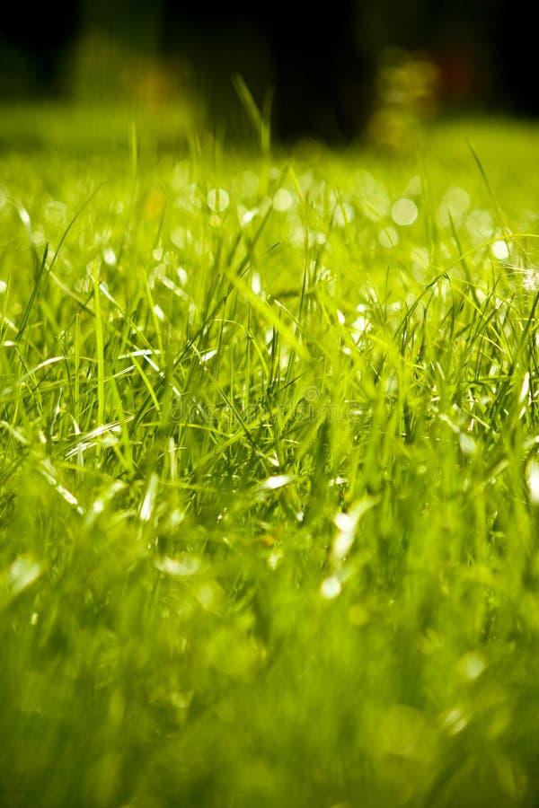Groen nat gras stock foto