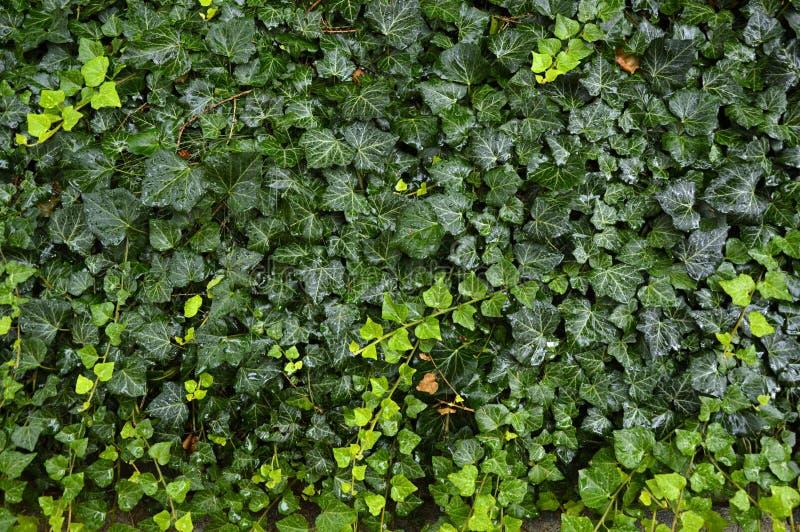 Groen nat tapijt stock afbeeldingen