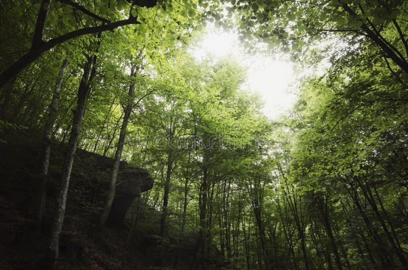 Groen natuurlijk bos royalty-vrije stock afbeeldingen