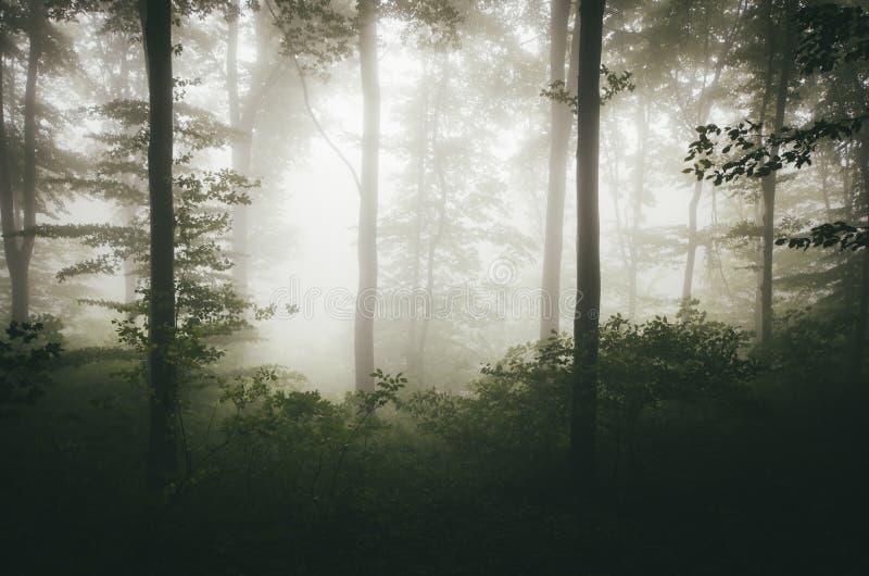 Groen natuurlijk bos met mist royalty-vrije stock foto's