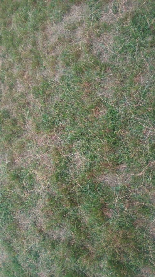 Groen natuurlijk vers gesneden gras stock foto
