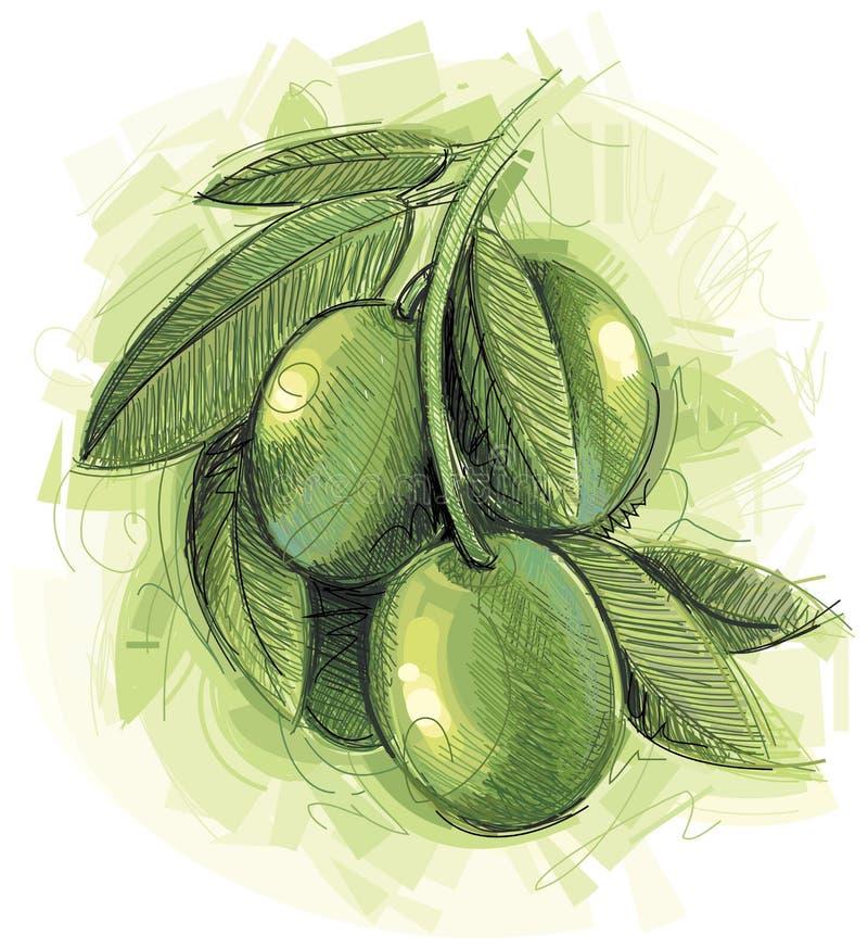 Groen Olijventakje vector illustratie