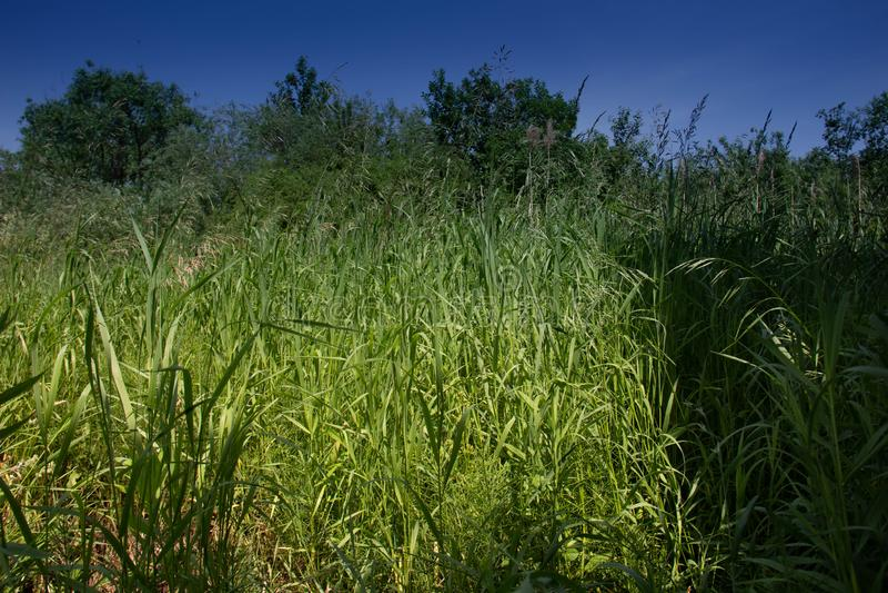 Groen, ongesneden gras op de kust van een bosmeer stock foto's