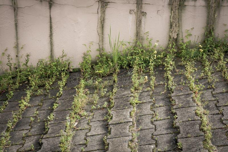 Groen onkruid op stoep stock foto