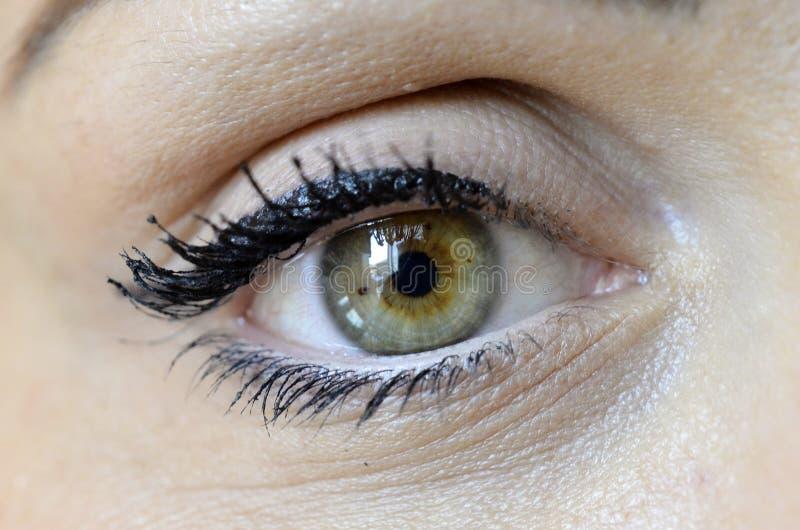 Groen oog die op vrouwelijk gezicht op witte achtergrond kijken royalty-vrije stock fotografie