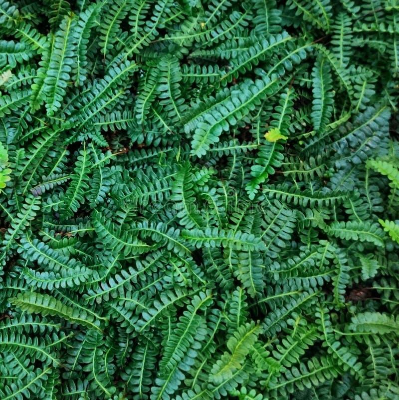 Groen op Groen, Botanisher Garten, Berlijn royalty-vrije stock afbeeldingen