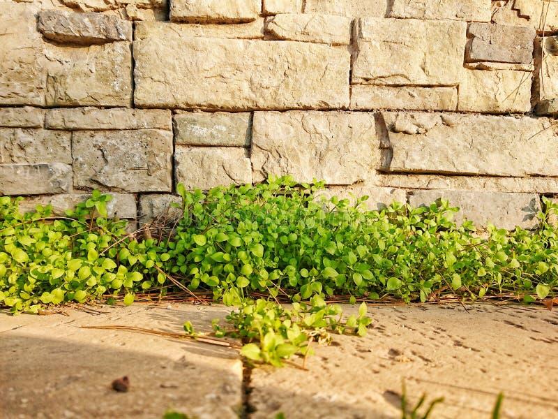 groen op steenmuur stock fotografie