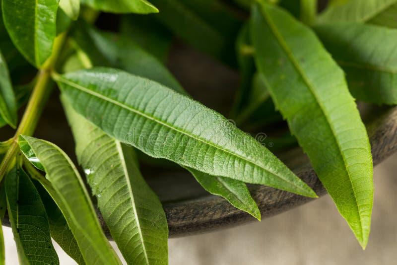 Groen Organisch Vers Citroenijzerkruid stock afbeelding