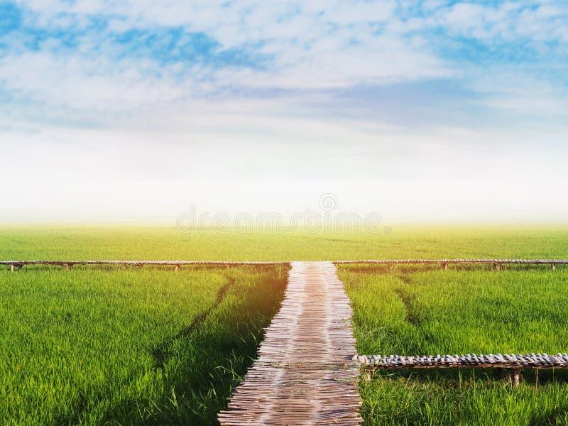 Groen padieveld en houten weg stock foto's