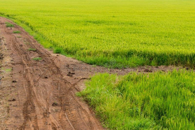 Groen padieveld met landweg stock afbeeldingen