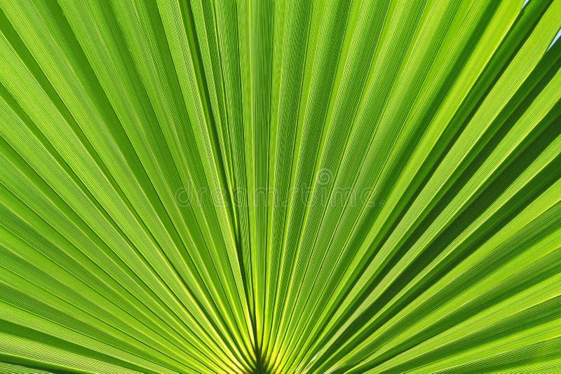 Groen palmblad royalty-vrije stock foto's