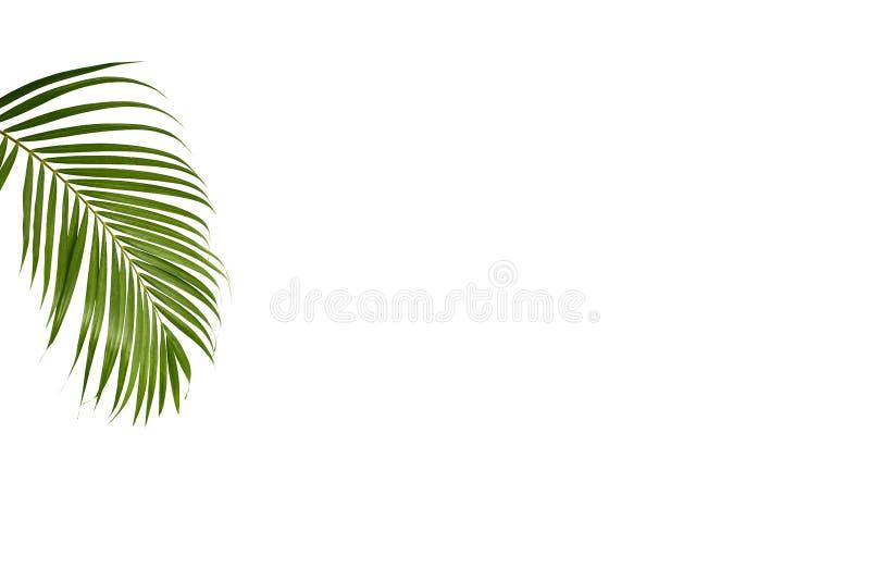 Groen palmblad geïsoleerd op wit royalty-vrije stock foto's