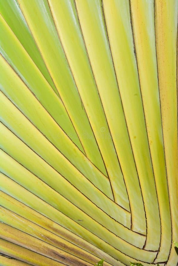 Groen palmbladenpatroon   stock afbeelding