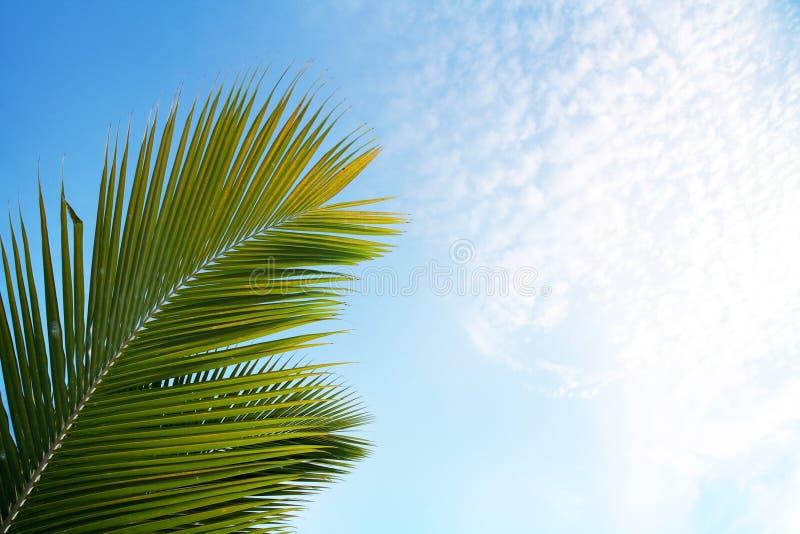 Groen palmenblad op blauwe hemel en witte wolken stock fotografie