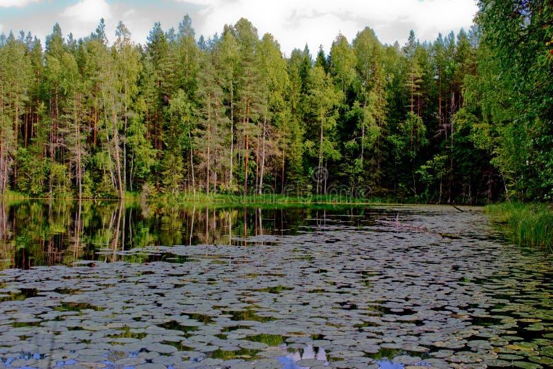 Groen paradijs stock fotografie