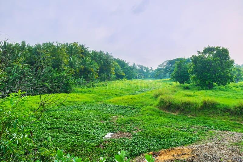 Groen paradijs in Sri Lanka stock fotografie