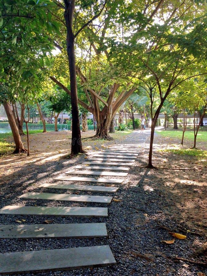 Groen Park royalty-vrije stock foto