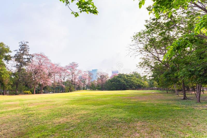Groen parklandschap met stedelijke achtergrond stock foto's