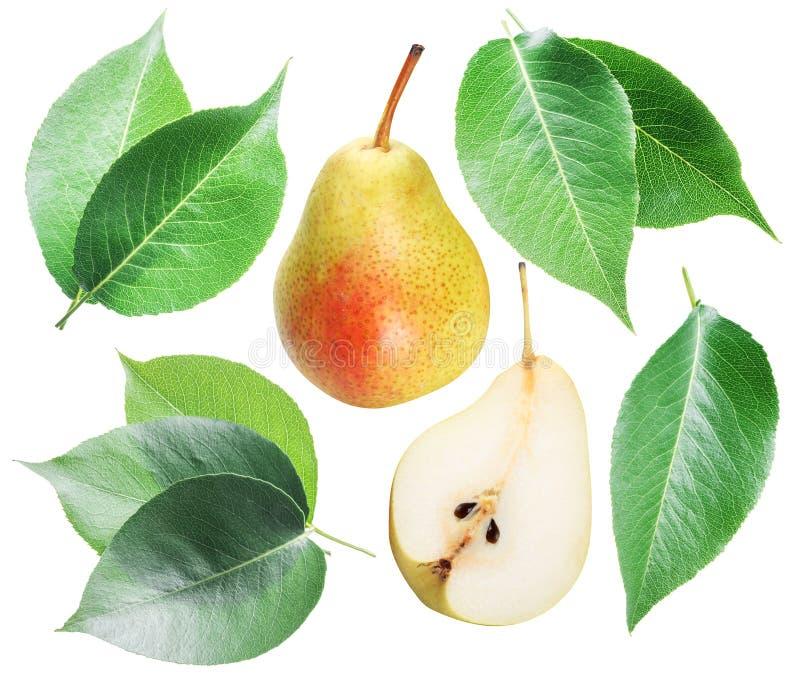 Groen perenbladeren en perenfruit op witte achtergrond royalty-vrije stock foto