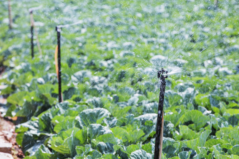 Groen plantaardig gebied in landbouwbedrijf stock fotografie