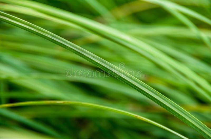 Groen riet in het moeras stock foto's