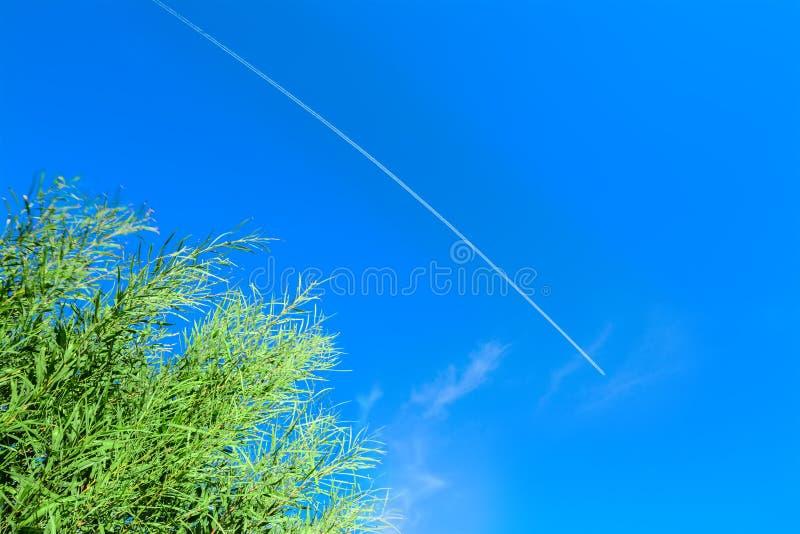 Groen riet onder een contrail in de blauwe hemel stock foto's