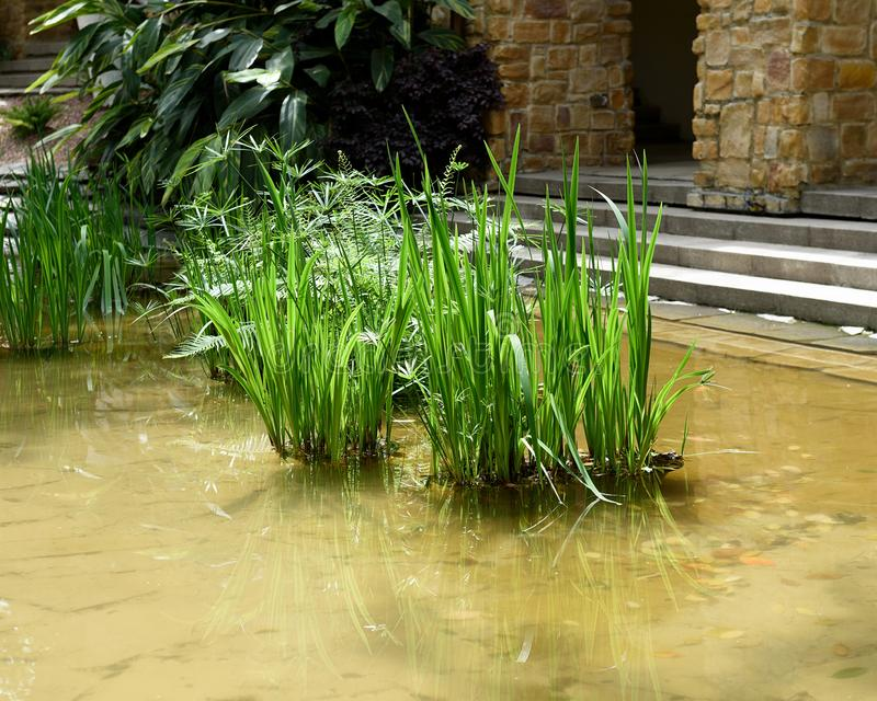 Groen riet in pool buiten de bouw royalty-vrije stock foto's