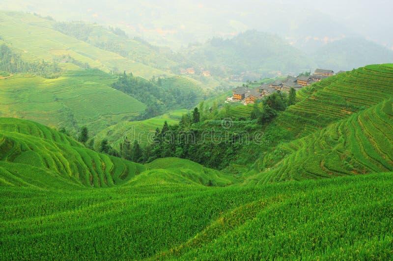 Groen rijstterras in de bergen van China royalty-vrije stock foto