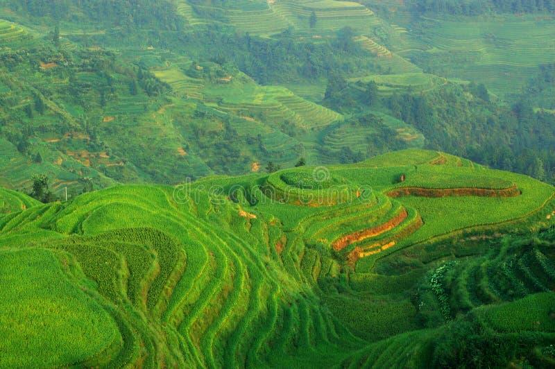Groen rijstterras in mountaines van China stock foto's