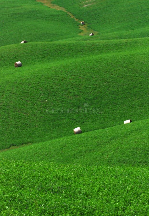 Groen rollend gebied royalty-vrije stock afbeeldingen