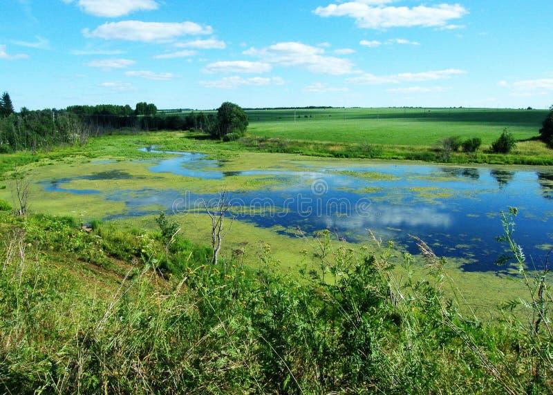 Groen slijm in het moeras royalty-vrije stock foto